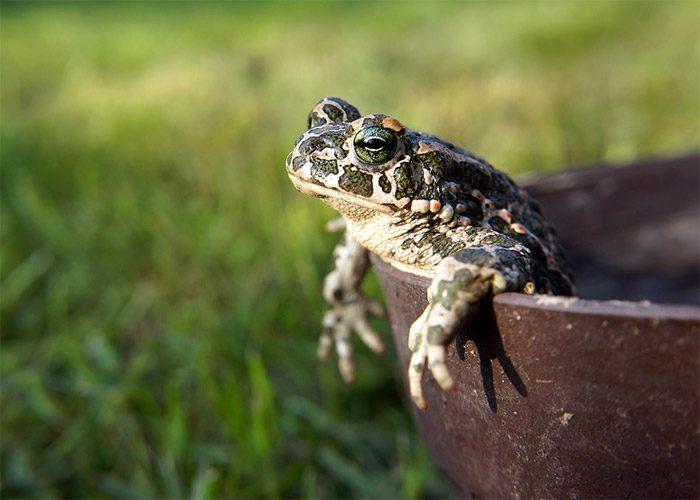 Приметы о лягушках: 20 интересных поверий и примет