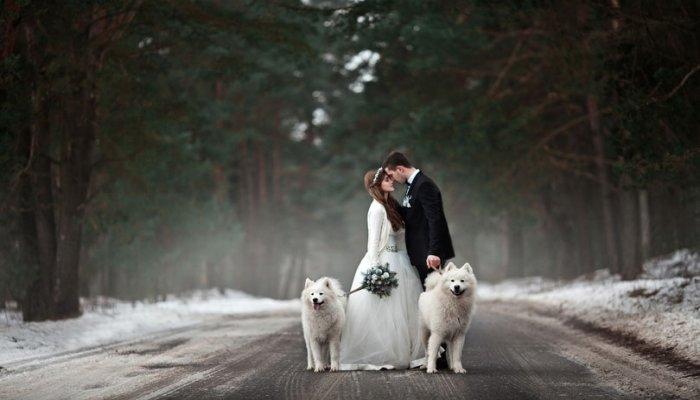 С собаками